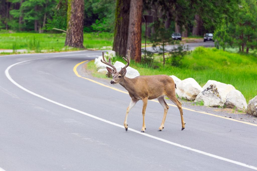emergency roadside assistance nj